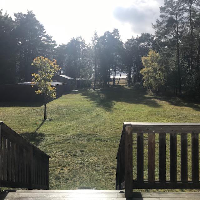 morgonljus över trädgård